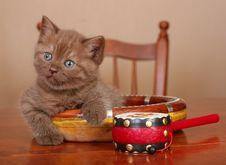 Scottish Kitten On A Table Royalty Free Stock Photos