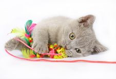 Free British Kittens With Toy Royalty Free Stock Photos - 20442978