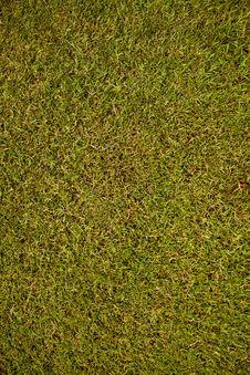 Free Grass Texture Stock Photo - 20442990