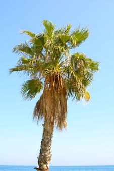 Free Palm On Seashore Royalty Free Stock Photography - 20444117