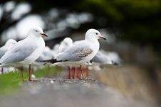 Free Seagull Standing On A Sea Wall Stock Images - 20444124
