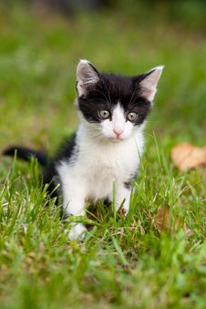 Young Cat In The Garden Royalty Free Stock Photo