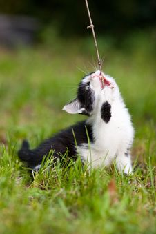 Free A Cat With A Stick Stock Photo - 20444210