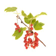 Free Red Currant Royalty Free Stock Photography - 20447717