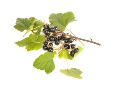 Free Black Currant Royalty Free Stock Images - 20447749