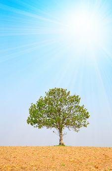 Free Tree Royalty Free Stock Photo - 20448145