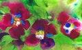 Free Three Violets Royalty Free Stock Image - 20450166