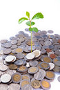 Free Little Growing On The Coin Stock Photography - 20456922