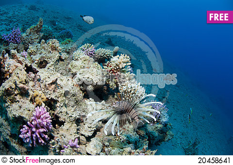 Free Lionfish And Corals Stock Image - 20458641