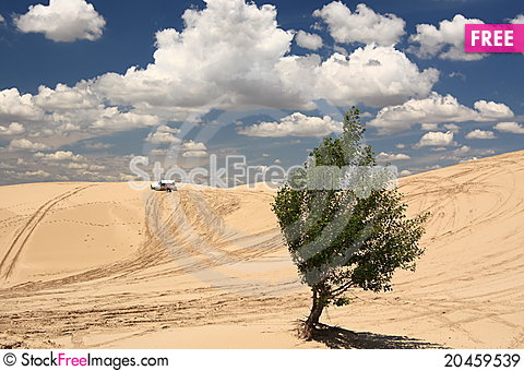 Free Desert Expedition Royalty Free Stock Images - 20459539