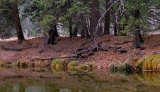 Forest Reflection Over The River Royalty Free Stock Photos