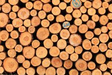 Free Cut Tree Log Royalty Free Stock Photography - 20450607
