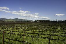 Free Wine Yard In The Mountain Royalty Free Stock Image - 20451536