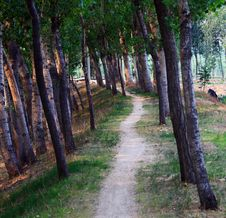 Free Tree Lined Path Royalty Free Stock Photos - 20453768