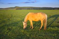 Free Pasture Horses Royalty Free Stock Image - 20454796