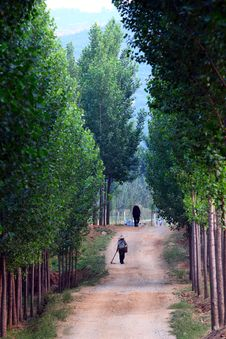 Free Tree Lined Path Royalty Free Stock Photos - 20455628