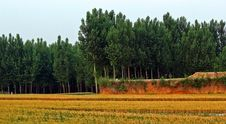 Free Wheat Fields And Woods Stock Image - 20455821