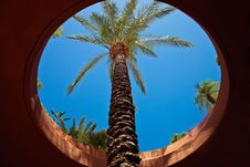 Free Palm Tree And Blue Sky Throw Round Window Royalty Free Stock Images - 20455889