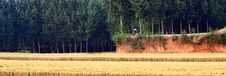 Free Wheat Fields And Woods Royalty Free Stock Photo - 20456235