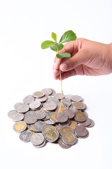 Free A Little Tree And Coin Stock Image - 20456721