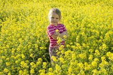 The Girl On A Meadow Royalty Free Stock Photography