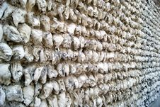 Free Oyster Shell Walls Stock Images - 20458874
