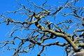 Free Wild Tree Set Against Dark Blue Sky Stock Photos - 20460163
