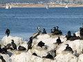 Free Sea Birds Stock Image - 20465301
