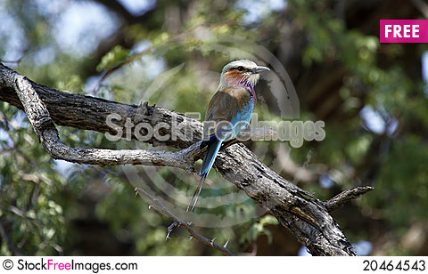 Colorful Roller Stock Photo