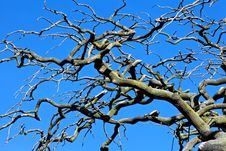Free Wild Tree Set Against Dark Blue Sky Stock Photos - 20460163