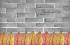 Free Colorful Leaves On Brick Wall Royalty Free Stock Images - 20460339