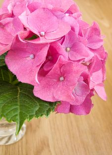 Free Pink Hydrangea Royalty Free Stock Images - 20461379