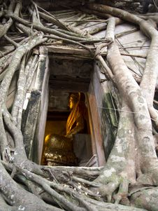 Free Ancient Temple Ruin With Golden Buddha Royalty Free Stock Photo - 20461665