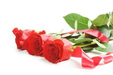 Free Red Rose Isolated On White Royalty Free Stock Image - 20461976