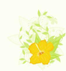 Free Hibiscus Stock Image - 20462011