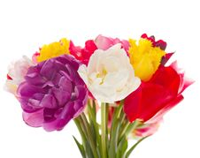 Free Bouquet Of Tulips Royalty Free Stock Images - 20462729