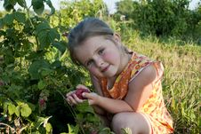 Free The Girl Collects A Raspberry Stock Photography - 20464952