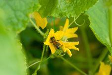 Free Bee Stock Photography - 20466022