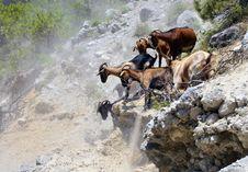 Free Goats On Mountain Stock Image - 20466741