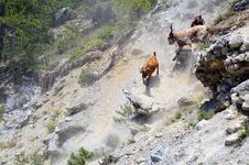 Free Goats On Rocks Stock Image - 20466841