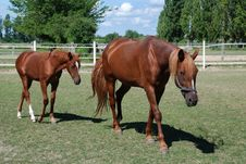 Free Mare And Foal Royalty Free Stock Image - 20467006