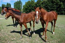 Free Horses Stock Photo - 20467050