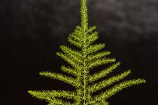 Green Fern Leaf Royalty Free Stock Image