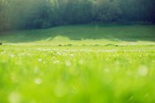 Free Blurred Green Field Background Royalty Free Stock Photos - 20469168