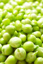 Free Green Peas With Waterdrops Stock Photo - 20473980