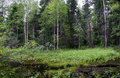 Free Wild Forest In West Siberia. Royalty Free Stock Photo - 20475815