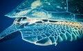 Free Sea Turtle Stock Images - 20478974
