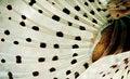 Free Lion Fish Tail Texture Stock Photo - 20479270