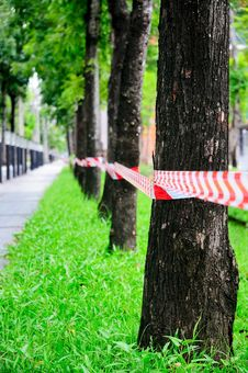 Free No Entry Through The Tree Row Stock Photo - 20471260