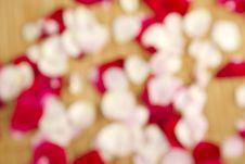 Free Rose Petals Stock Photos - 20471493
